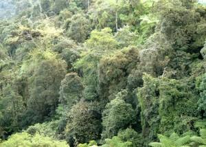 Genting Highland Rain Forest